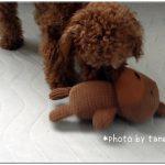 【犬のおもちゃ】激しく振り回しても破れにくい ぬいぐるみが超お気に入り♪