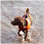 【犬のライフジャケット】ワンコと楽しく水遊び♪安全対策にライフジャケットを購入しました。