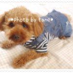 【犬の服】愛犬に着せたい可愛い服♪プチプラでカワイすぎるつなぎ服にノックアウト!