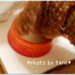 【犬のミルク】愛犬の栄養サポートに牛乳とハチミツが原材料の森乳ハネミル(液状)がおいしい~♪