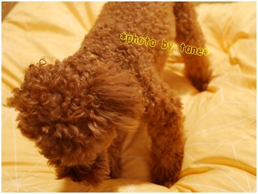 【トゥルースリーパー/ホオンテック掛布団】軽い&洗濯できる!ポカポカすぎて快適快眠♪口コミ!