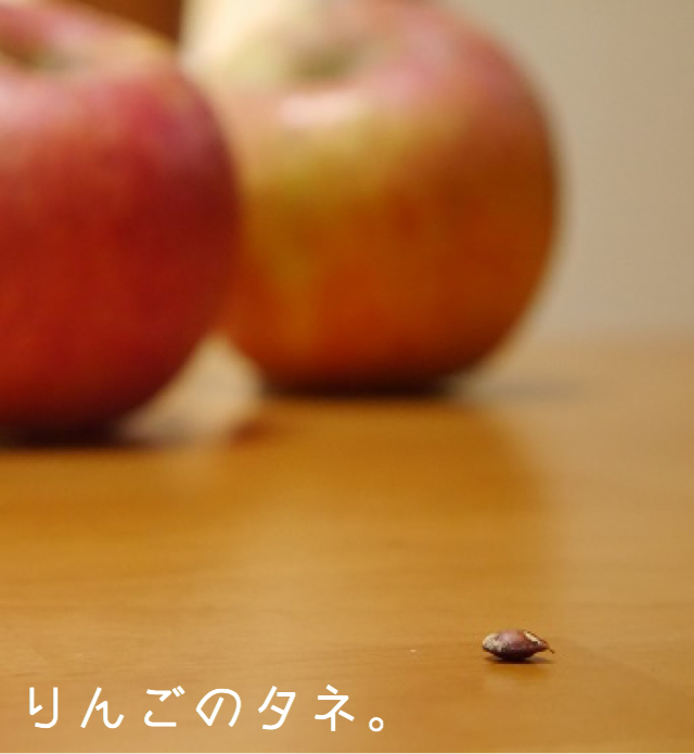tane(タネ)